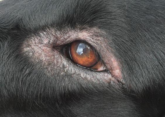 Linkes Auge, Bild vom 31.3.2015