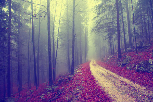 Papel tapiz de bosque Gutemala