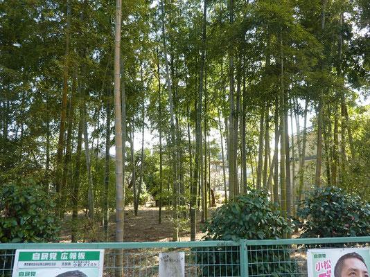 粕谷本橋家の竹林(地域風景遺産)