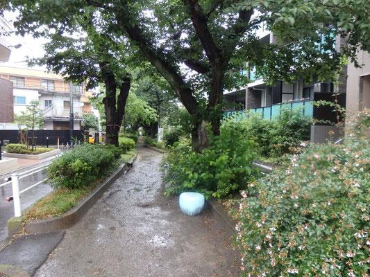 柿のk坂緑道