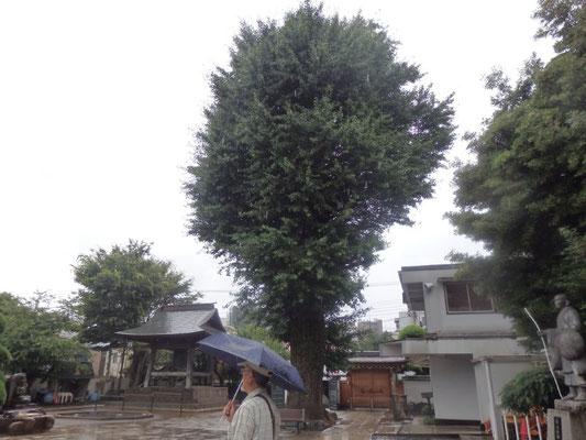 東光寺の大銀杏