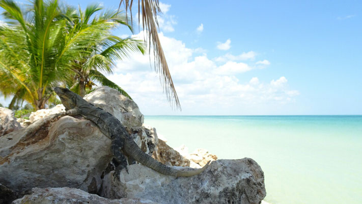 Holiday in Holbox