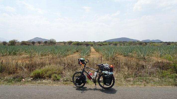 El camino de mezcal after Oaxaca
