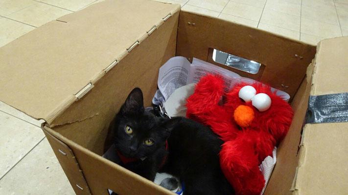 Maya and Elmo in the box