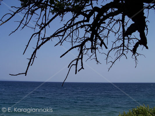 Tyros/Greece 2011