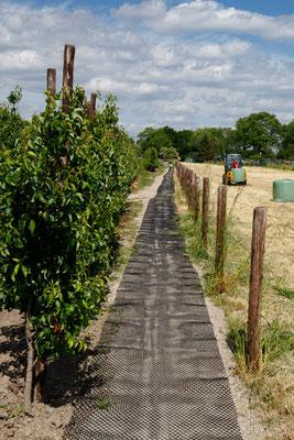 heerlijk, een verhard pad zonder modder. 120 meter graafwerk, puin kruien en vlakrollen wordt gewaardeerd!
