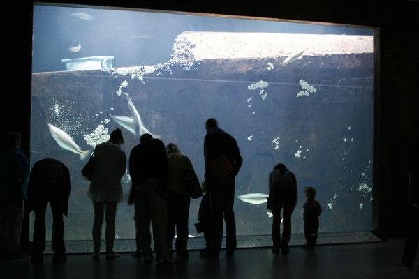 Aquarium Hirtshals