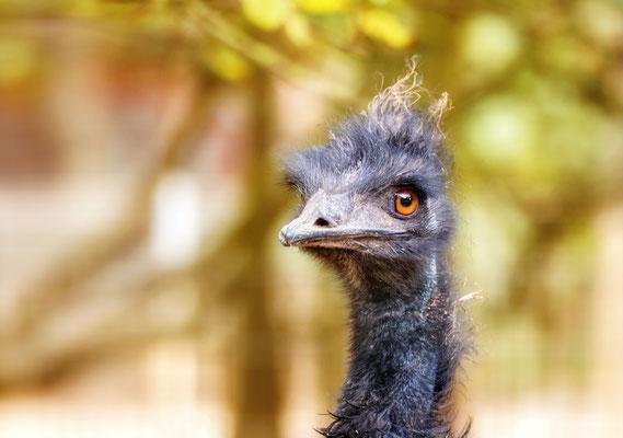 """""""Emu!"""""""