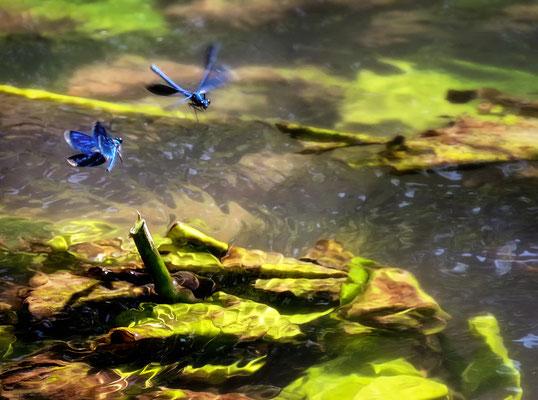 """Dragonfly dance!"""