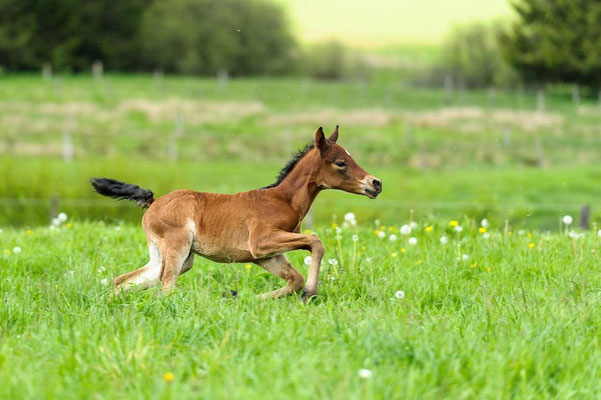 22.5.2012 (c) Pferdefotograf