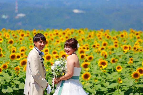 ひまわりウェディング前撮りロケ撮影満開ひまわりを背景に新郎新婦の写真