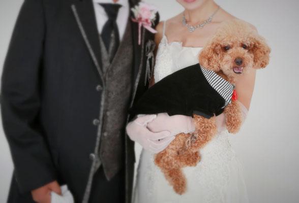 山梨 フォトウェディング ペットと一緒に結婚写真フォトウェディング ペット撮影 わんわんランド 犬 猫 動物ペットフォトスタジオ