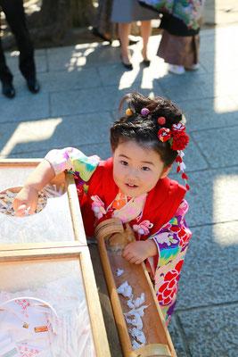 山梨県七五三武田神社のこどもおみくじをひく三歳女の子の七五三写真