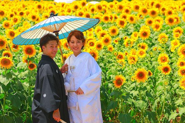 ひまわり和装前撮り山梨県明野ひまわりフェスティバル撮影の和装打掛写真