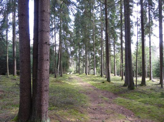 Waldpfad Richtung Steegen