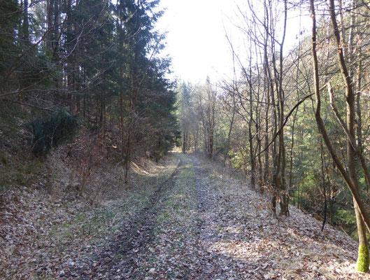Waldweg kurz nach Geßmannszell