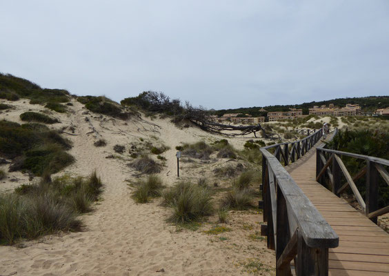 Sanddünen an der Cala Mesquida