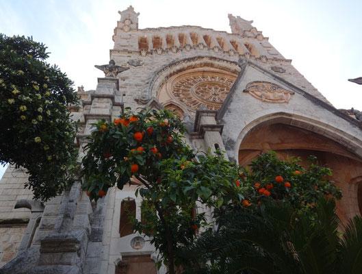Orangenbaum vor der Kirche in Soller