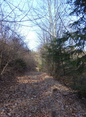 Waldpfad hinauf zum Kobelberg