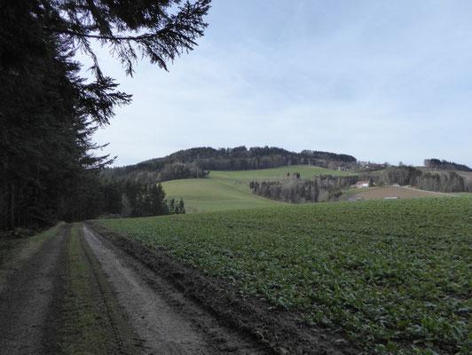 Aufstieg auf den Blumenberg