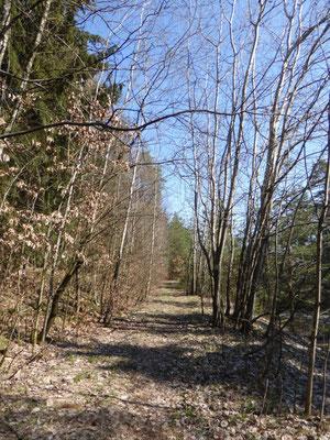 schöner Waldpfad nach St. Johann