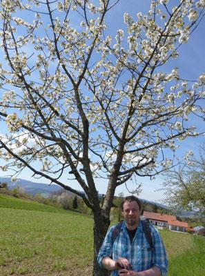 Stilleben: Mann vor Baum mit Blüten :-))