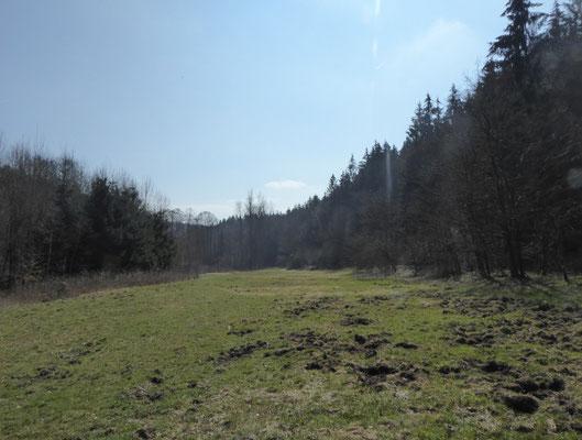 Wiese mitten im Wald