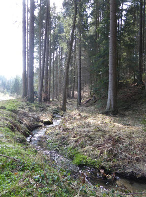 Am Großen Leithenbach geht es ins Tal