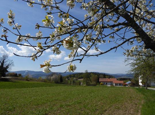 Blick auf Neunussberg