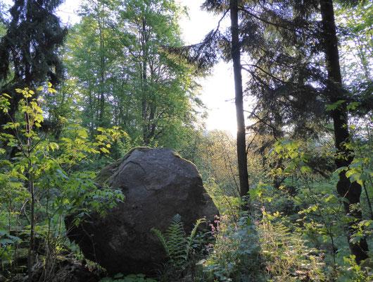 """""""Hinkelstein"""" vor Sonne im Wald :-))"""