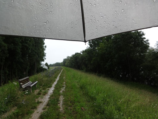 Im Regen am Donaudamm entlang