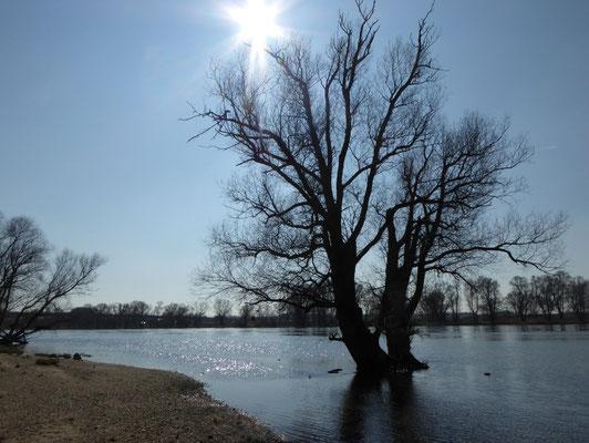 Donau kurz nach Bogen