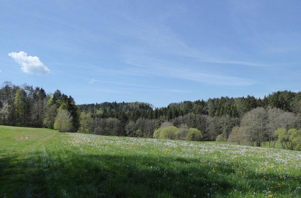 Blumenwiese bei Haselbach
