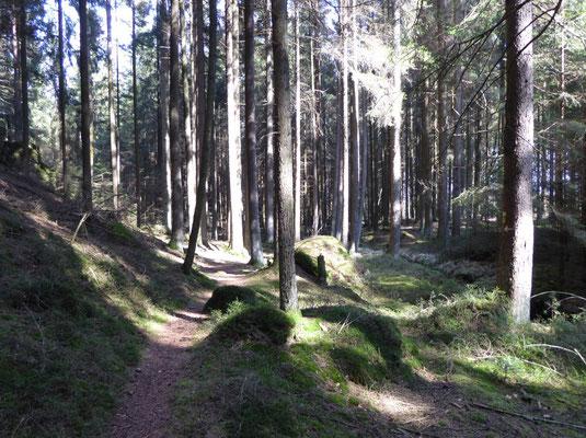Waldpfad am Teufelsbach entlang