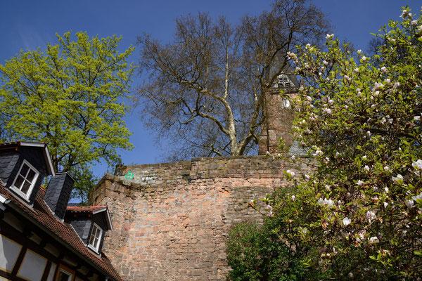 MAI 2015 _ Michael Ellwardt - Malerisch in der Marburger Oberstadt - langsam übernimmt das Grün und die Blütenfarben von Fachwerk und alten Mauern.