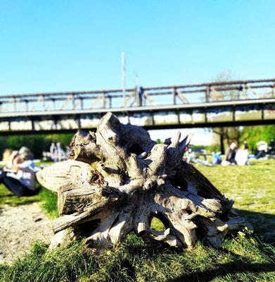 in der Isarau an der Braunauer Brücke