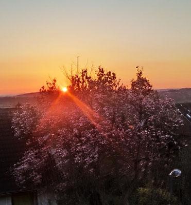 Ein schöner Tag neigt sich dem Ende ... 02.04.21