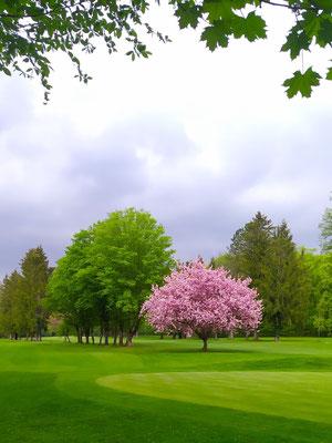 Münchner Golfplatz, 11. Mai '21