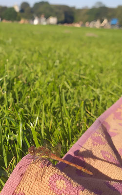 eine Libelle leistet mir Gesellschaft 😃