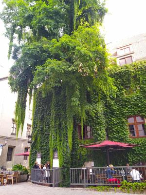 hübsche Baumkultur am Platzl