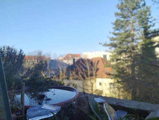 ... Eis entfernt, Wasser aufgefüllt - kurz darauf Anflug der ersten Fluggäste: Trinken & Baden