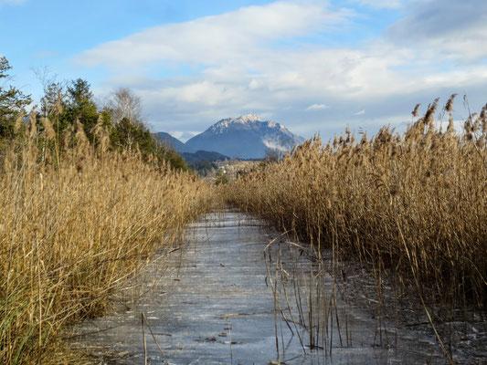 Wunderbarer Blick vom Presseggersee durch den Schilfgürtel auf den Dobratsch (Villacher Alpe)