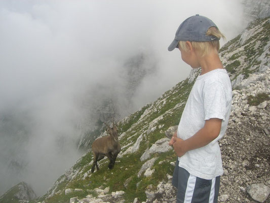 2 Kinder - Junger Steinbock und Menschenkind auf dem Weg zum Cima di Terrarossa