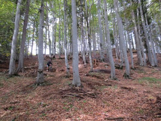 Von der Seisera geht es auf steilem, matschigem Pfad durch Buchenwald hinunter in die Seisera