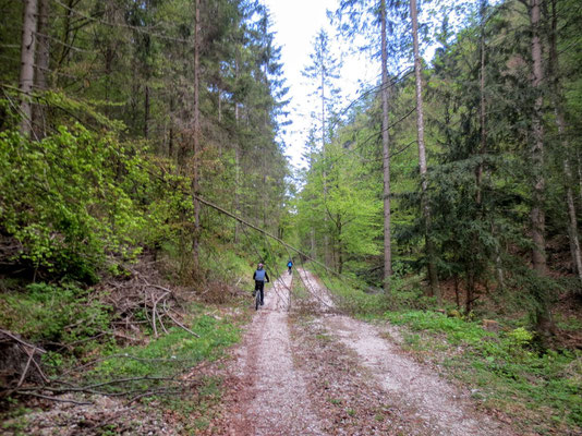 Im Weissenbachgraben entlang der alten Bleibergerstrasse