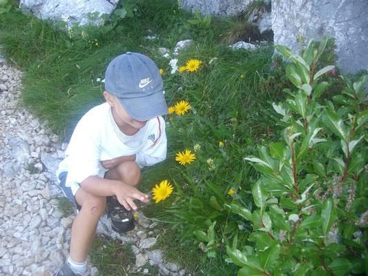 Herrliche Blumenpracht auf der Pecol-Alm unterhalb des Terrarossa