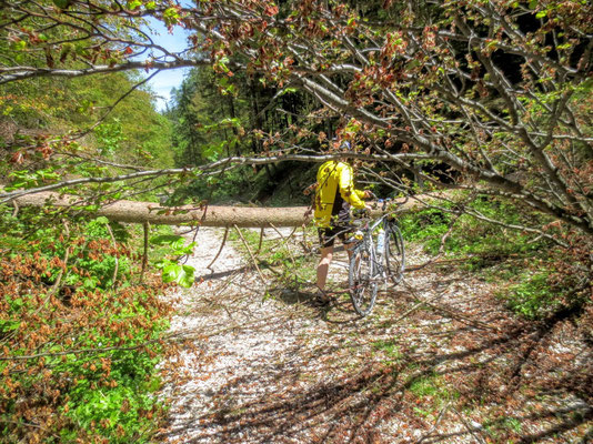 Abenteuerlich geht es durch den Weissenbachgraben nach Mittewald