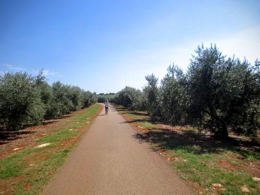 Durch Olivenhaine mit der tiefroten Erde geht es wieder zurück...