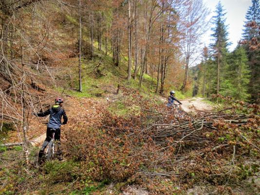 Umgestürzte Bäume des überraschenden Wintereinfalles eine Woche zuvor...