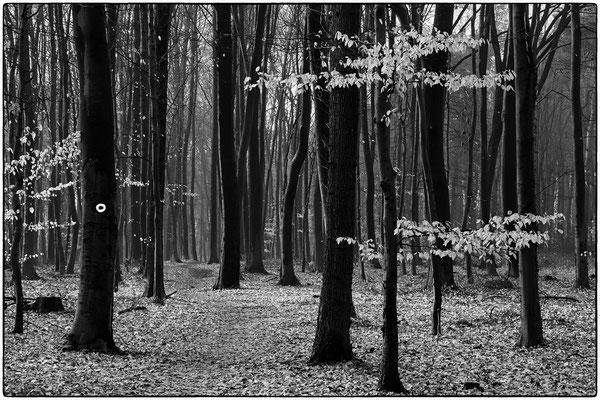 DUburger Wald